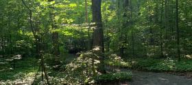 Wagg's Woods Sun Beams